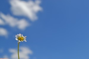 flower-169432_1920